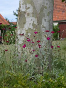 Peter Englander Flagnande kamouflage