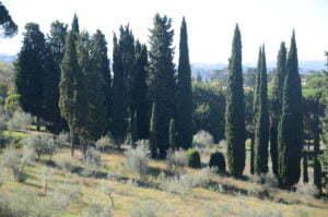 Peter Englander Stora Toscana i Toscana