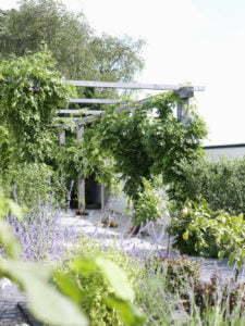 Peter Englander Pergola byggd i sågad ek. Vid varannan stolpe klänger blåregn.