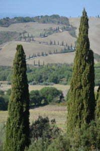 Peter Englander Toscana? Ja! Cypresser? Ja!